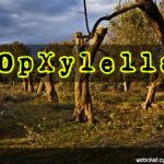 #OpGreenRights  Xylella il batterio killer